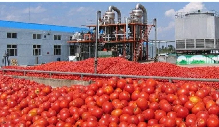 N20 billion tomato processing company in Kebbi